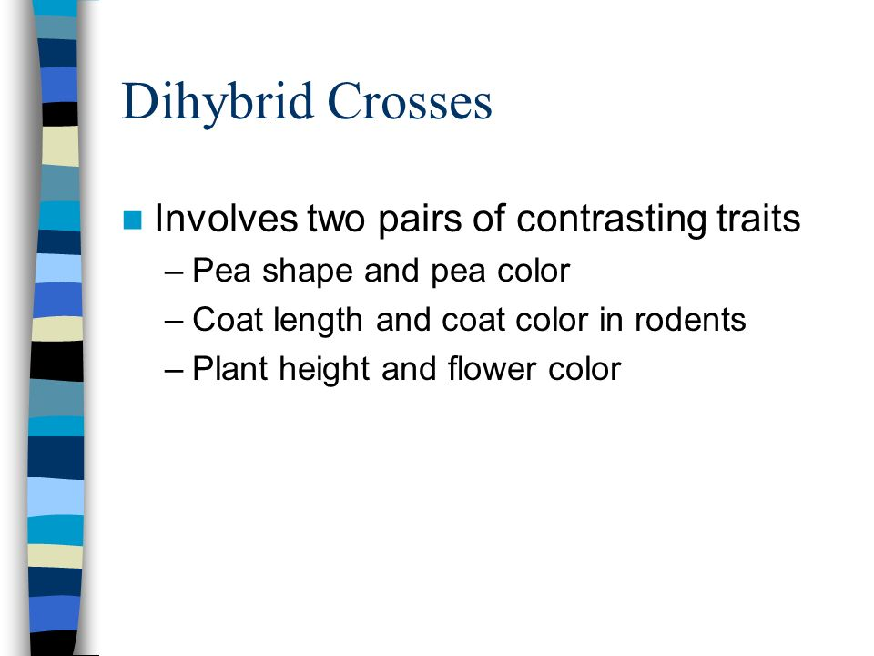 Dihybrid Crosses Involves two pairs of contrasting traits