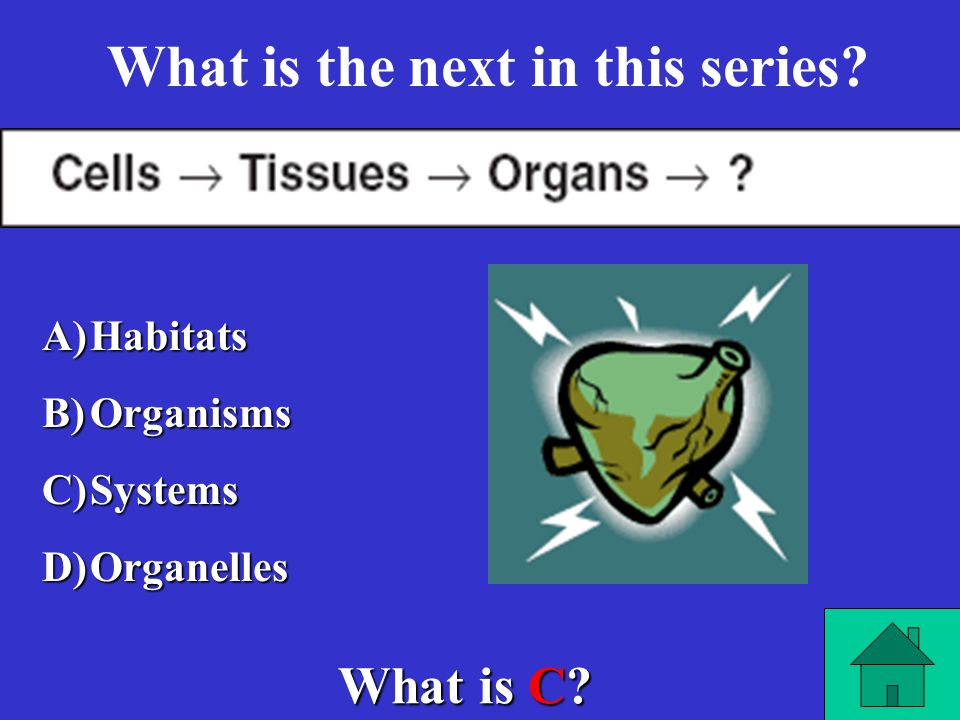 What is the next in this series