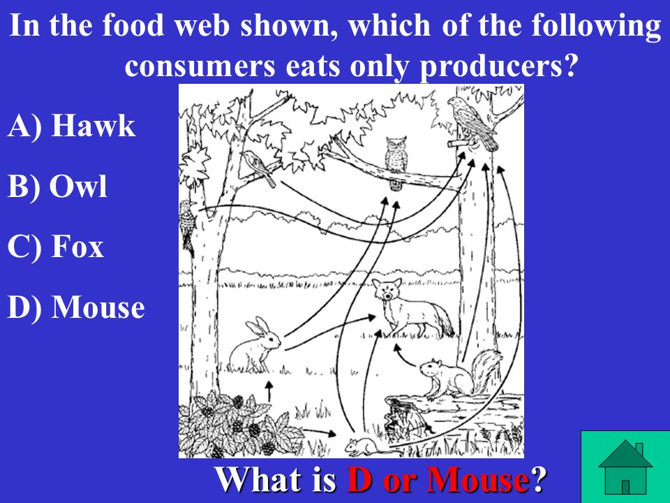 In the food web shown, which of the following consumers eats only producers