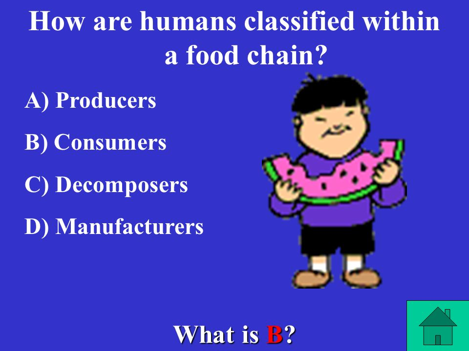 How are humans classified within a food chain