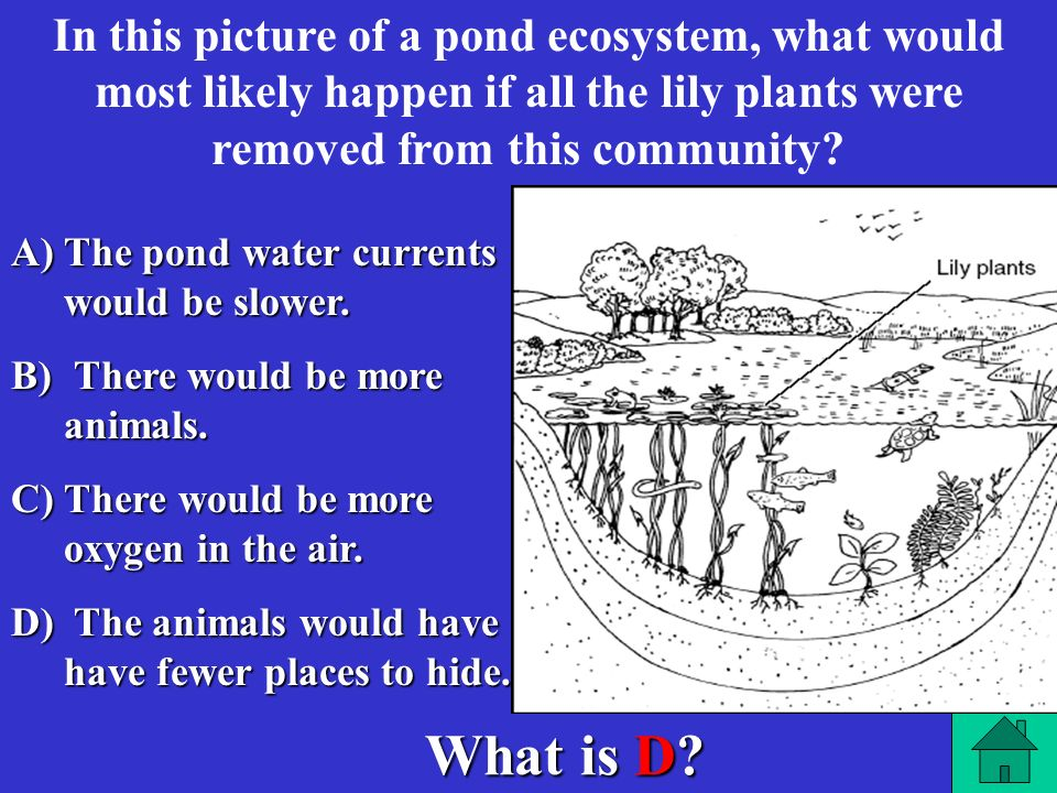 In this picture of a pond ecosystem, what would most likely happen if all the lily plants were removed from this community