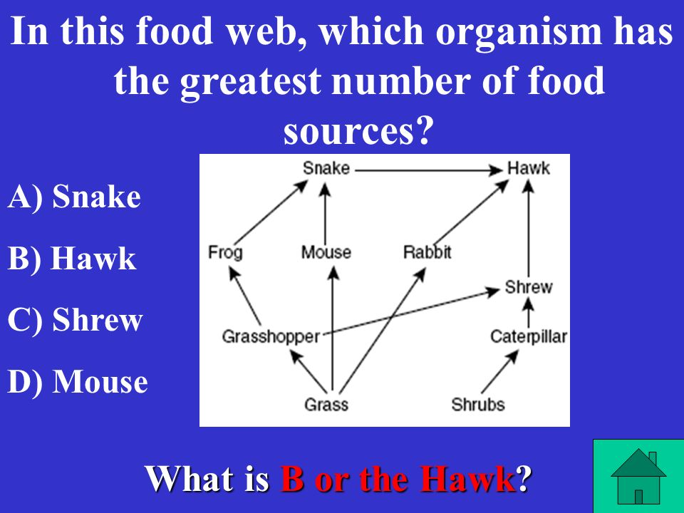 In this food web, which organism has the greatest number of food sources