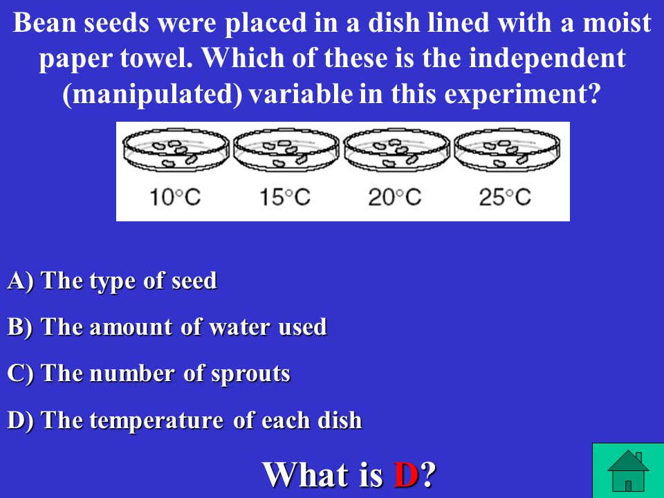 Bean seeds were placed in a dish lined with a moist paper towel