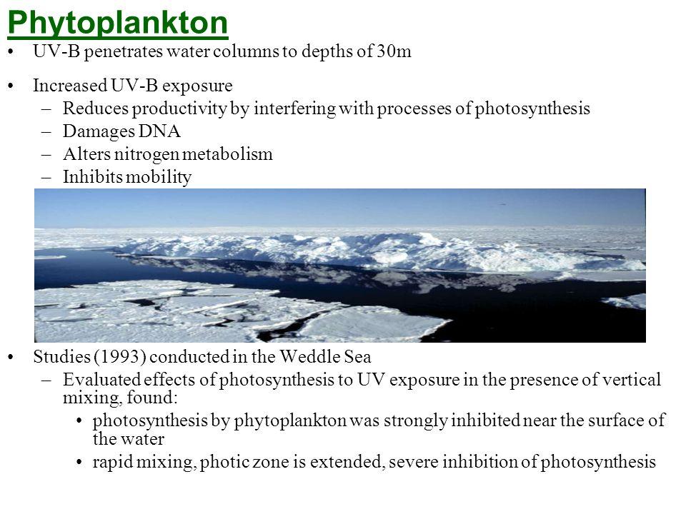 Phytoplankton UV-B penetrates water columns to depths of 30m