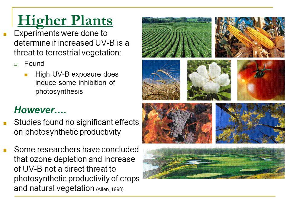Higher Plants However….