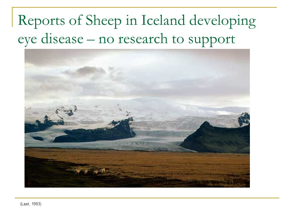 Reports of Sheep in Iceland developing eye disease – no research to support