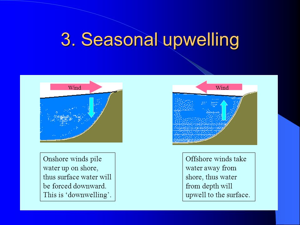 3. Seasonal upwelling Wind. Wind. Onshore winds pile water up on shore, thus surface water will be forced downward. This is 'downwelling'.