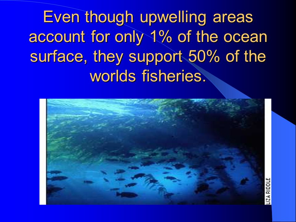 Even though upwelling areas account for only 1% of the ocean surface, they support 50% of the worlds fisheries.