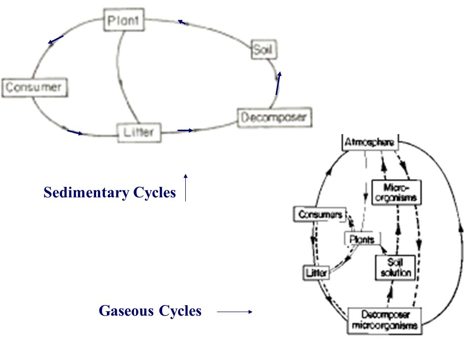 Sedimentary Cycles Gaseous Cycles