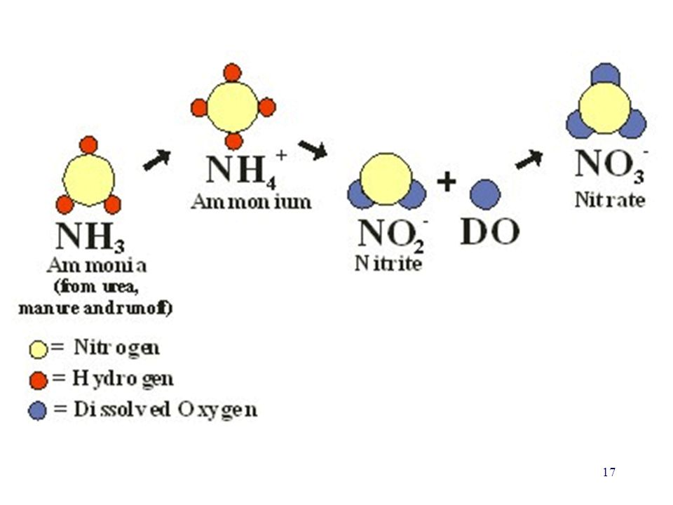 Chemical reactions occur such that Ammonia, Ammonium and Nitrite are transformed into Nitrates, which are then taken up by plants