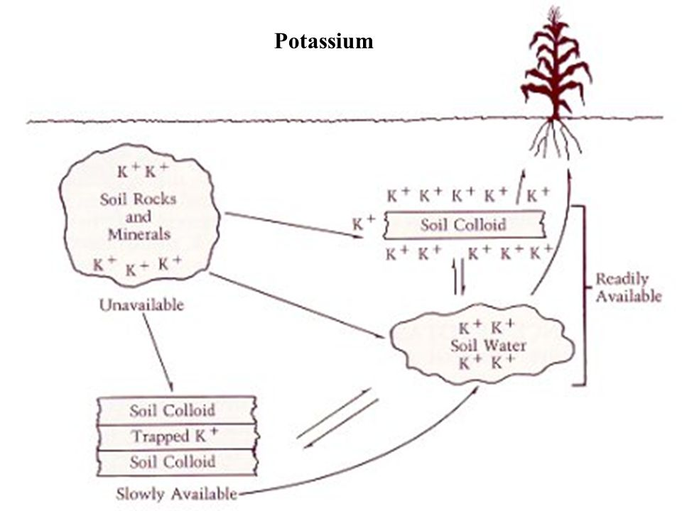PotassiumThe final type of macro-nutrient is represented by potassium, which is available as a cation – positively charged ion.