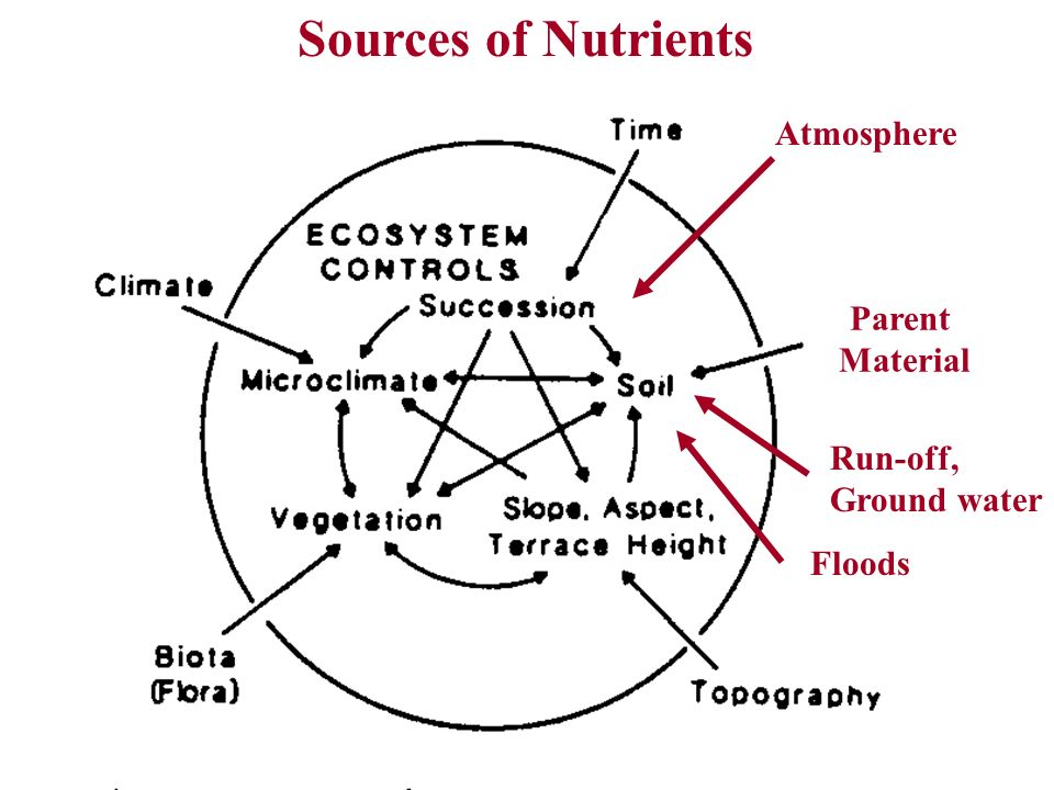 Sources of Nutrients Atmosphere Parent Material Run-off, Ground water