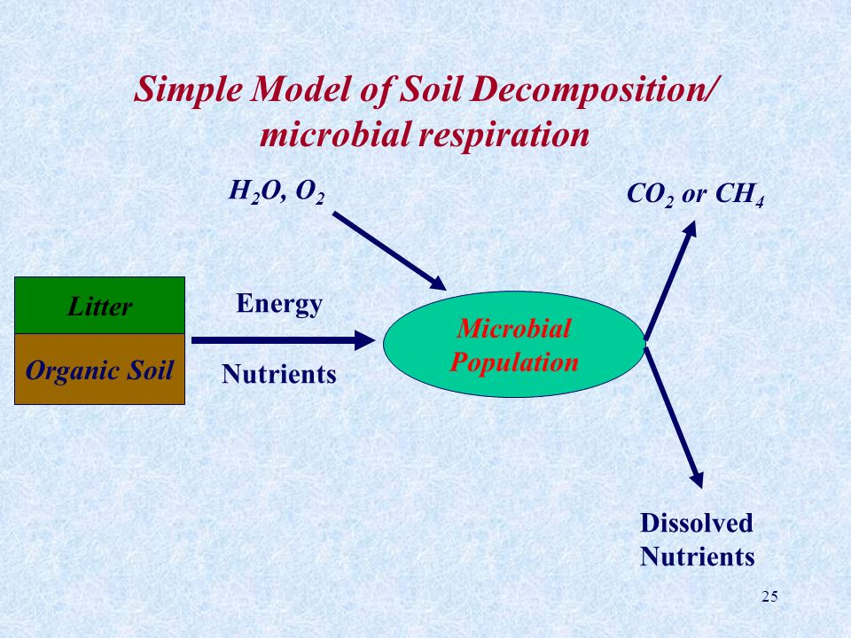 Simple Model of Soil Decomposition/ microbial respiration