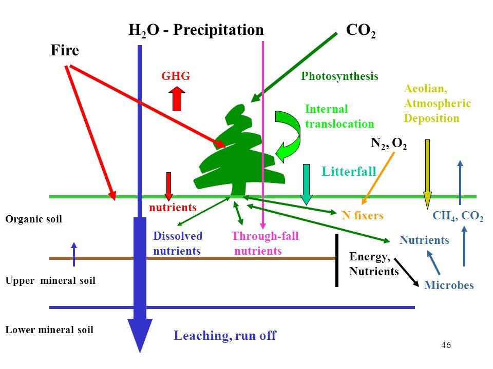 H2O - Precipitation CO2 Fire N2, O2 Litterfall Leaching, run off GHG