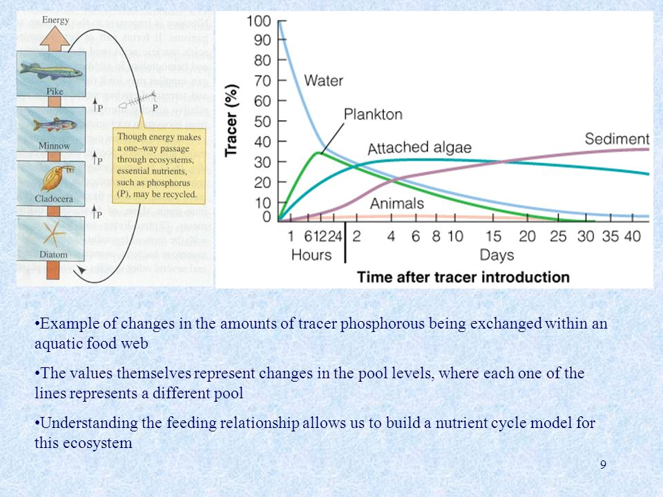 Example of changes in the amounts of tracer phosphorous being exchanged within an aquatic food web