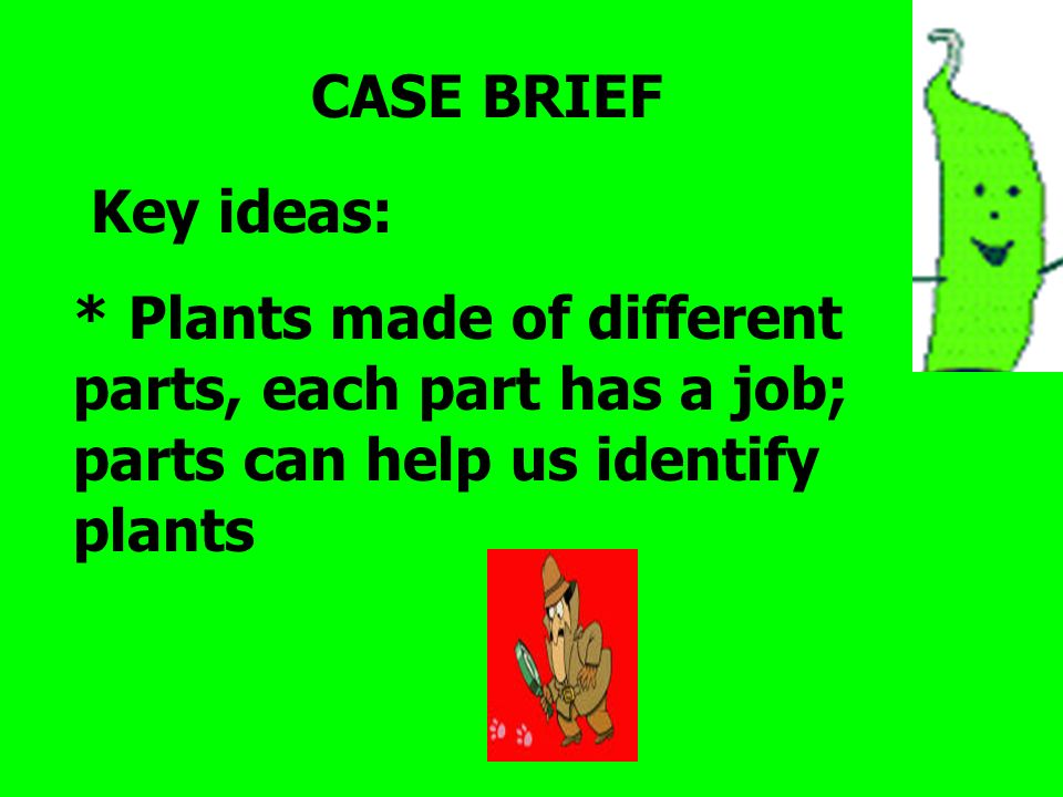CASE BRIEF Key ideas: * Plants made of different parts, each part has a job; parts can help us identify plants.