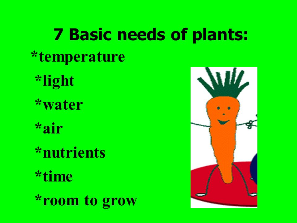 7 Basic needs of plants: *temperature *light *water *air *nutrients *time *room to grow