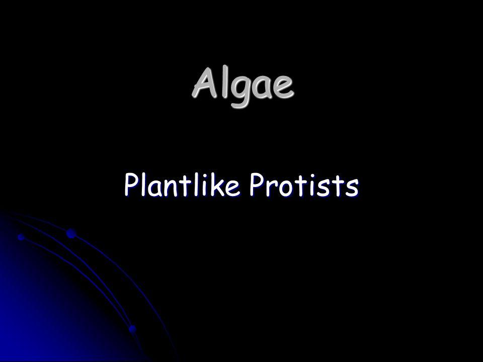 Algae Plantlike Protists
