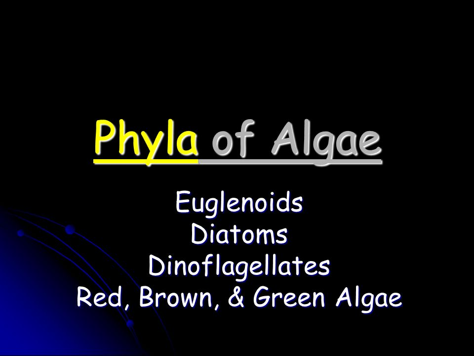 Euglenoids Diatoms Dinoflagellates Red, Brown, & Green Algae