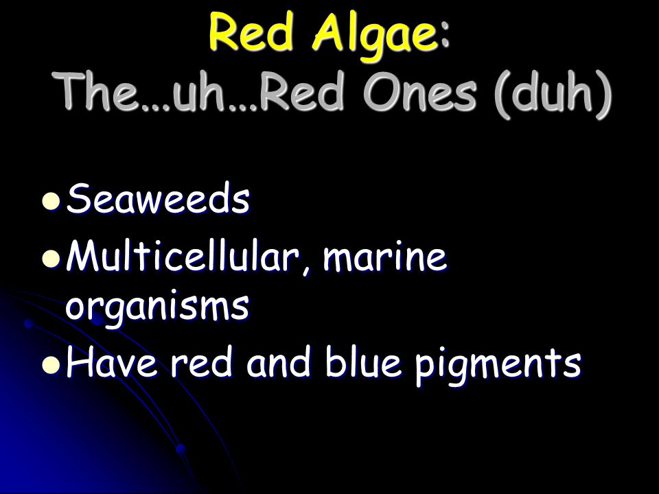 Red Algae: The…uh…Red Ones (duh)