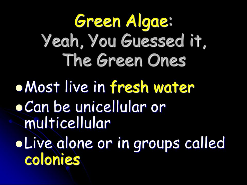 Green Algae: Yeah, You Guessed it, The Green Ones