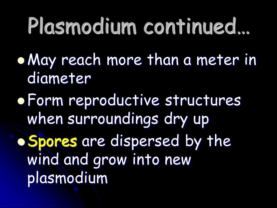 Plasmodium continued…