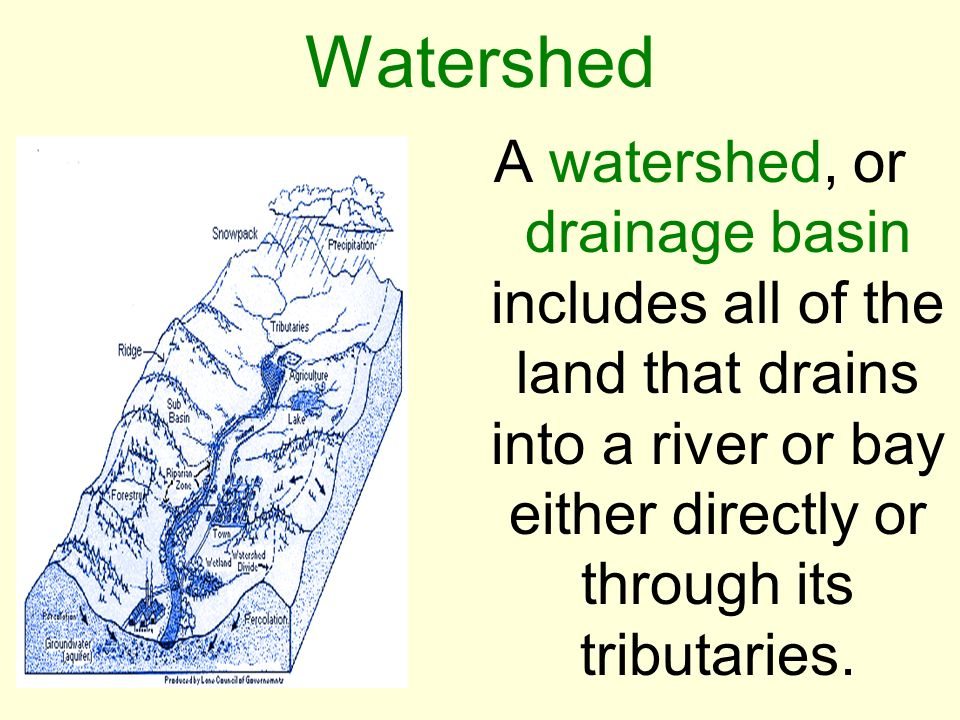 Watershed A watershed, or drainage basin includes all of the land that drains into a river or bay either directly or through its tributaries.
