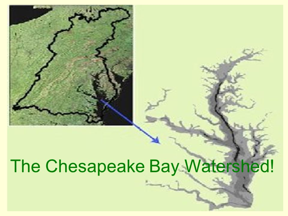 The Chesapeake Bay Watershed!