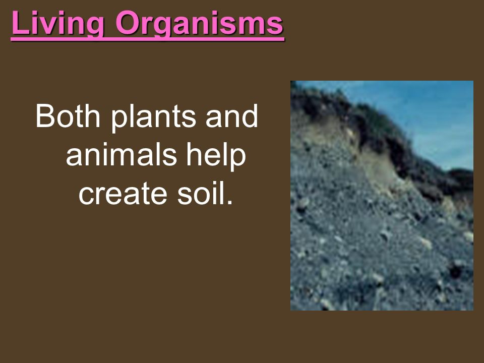 Both plants and animals help create soil.