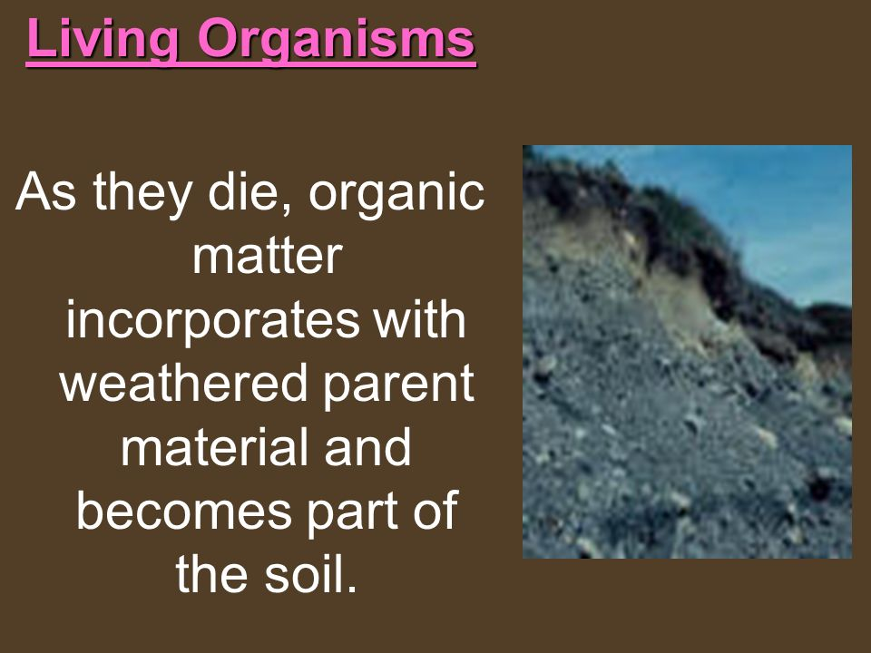 Living Organisms As they die, organic matter incorporates with weathered parent material and becomes part of the soil.