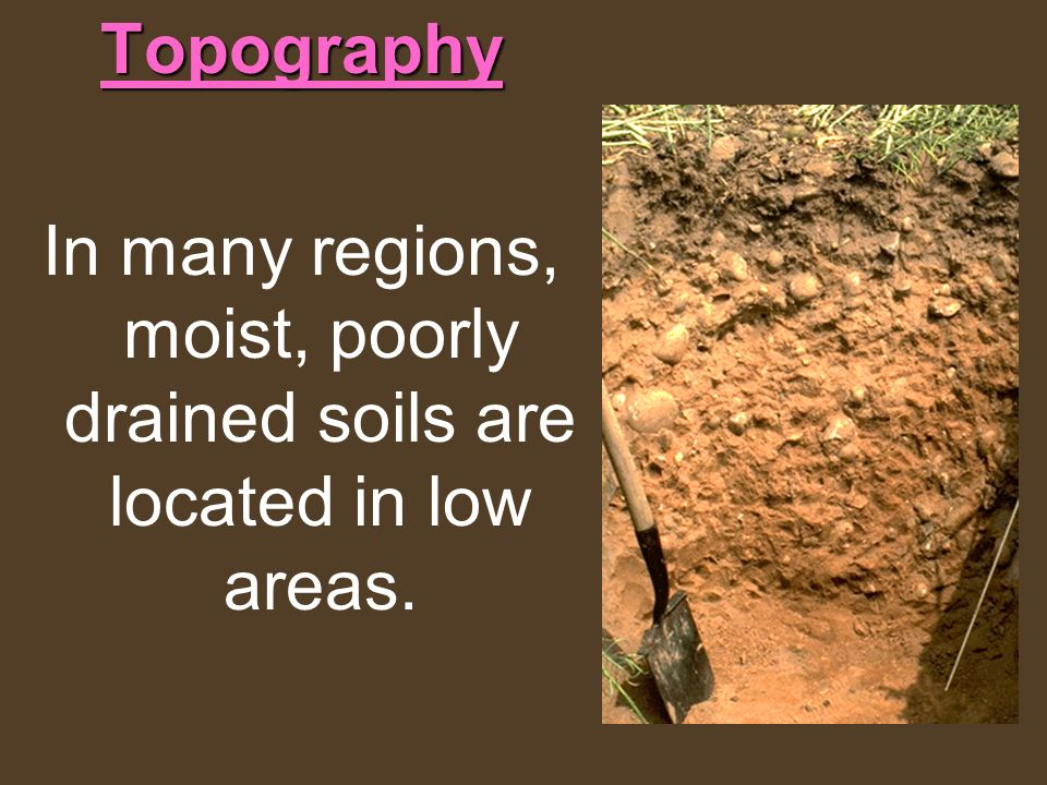 In many regions, moist, poorly drained soils are located in low areas.