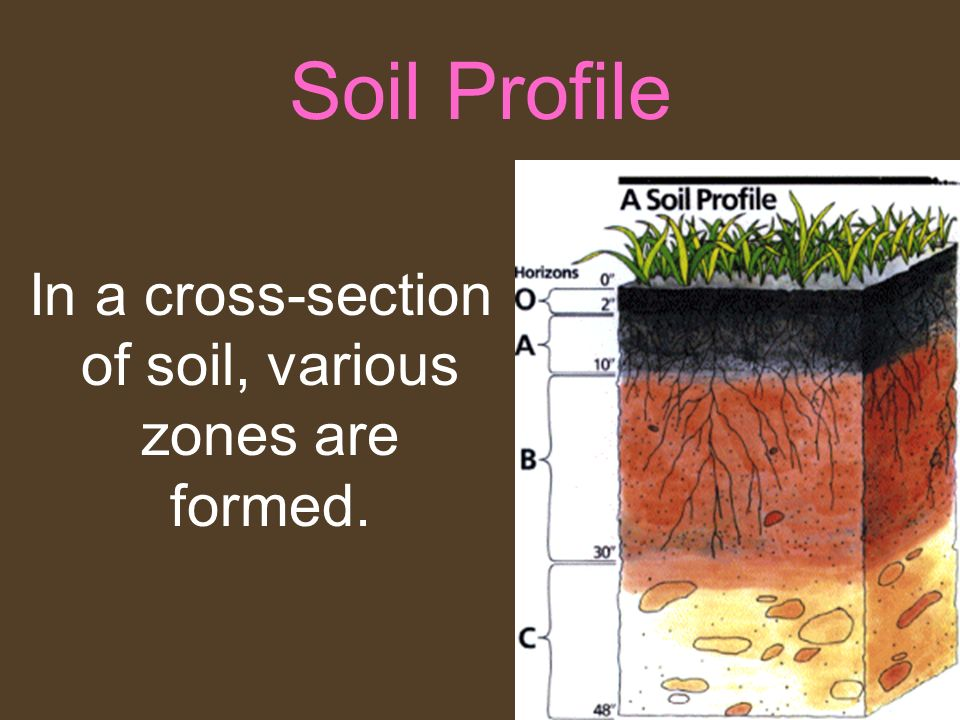 In a cross-section of soil, various zones are formed.