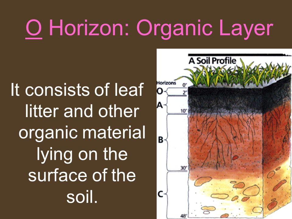 O Horizon: Organic Layer