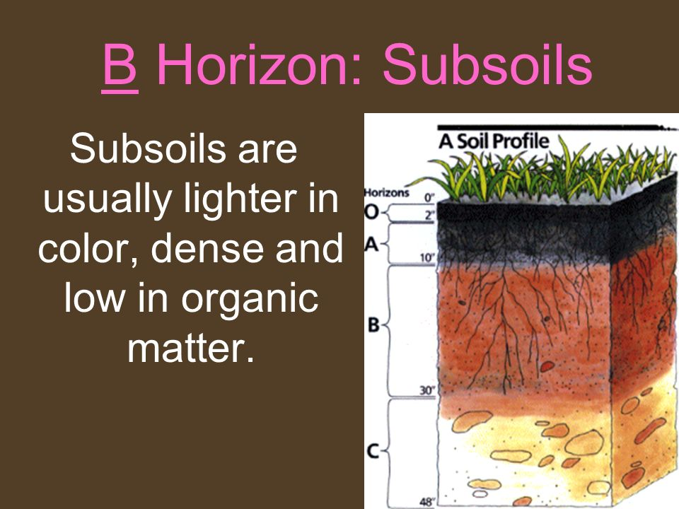 B Horizon: Subsoils Subsoils are usually lighter in color, dense and low in organic matter.