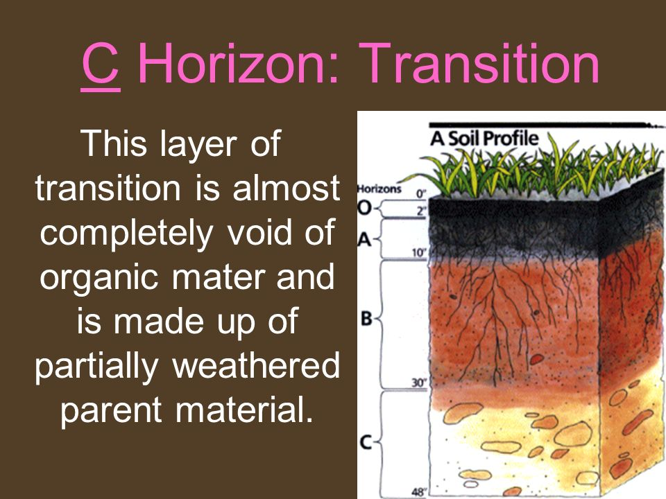 C Horizon: Transition This layer of transition is almost completely void of organic mater and is made up of partially weathered parent material.