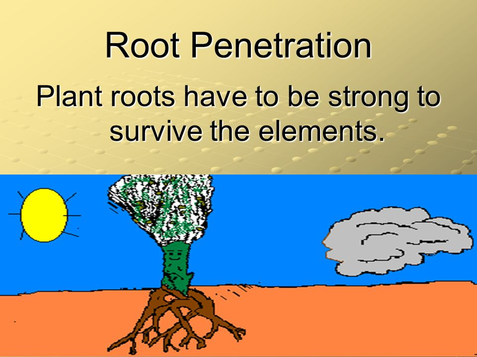 Plant roots have to be strong to survive the elements.