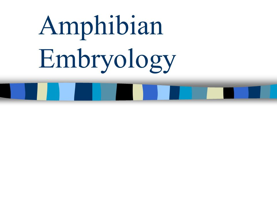 Amphibian Embryology