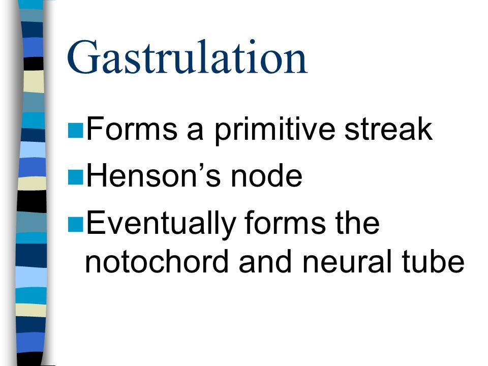 Gastrulation Forms a primitive streak Henson's node