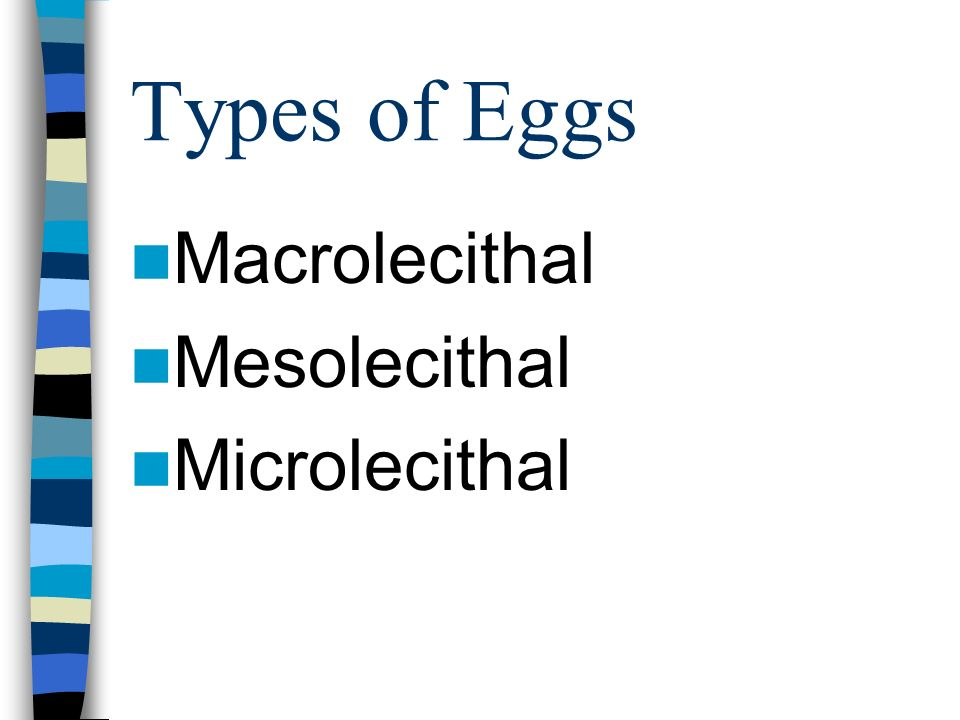 Types of Eggs Macrolecithal Mesolecithal Microlecithal