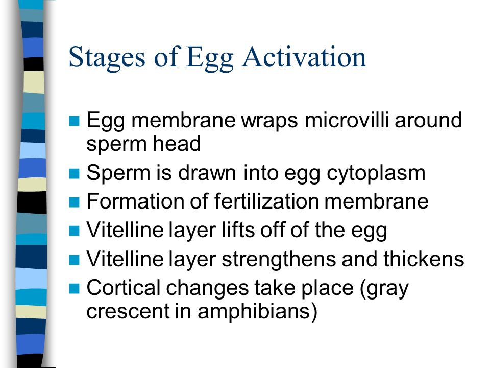 Stages of Egg Activation