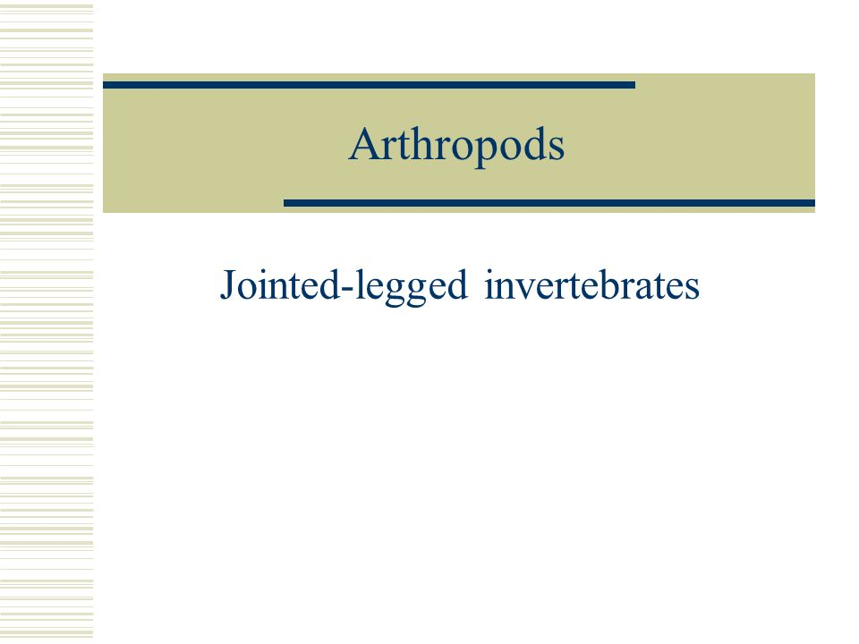 Jointed-legged invertebrates