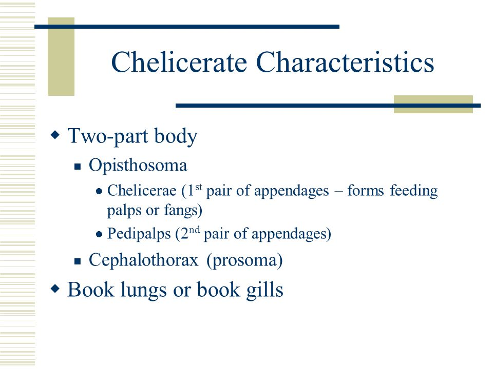 Chelicerate Characteristics