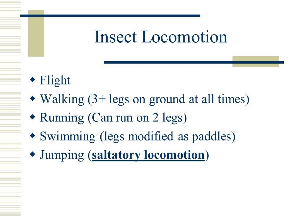 Insect Locomotion Flight Walking (3+ legs on ground at all times)
