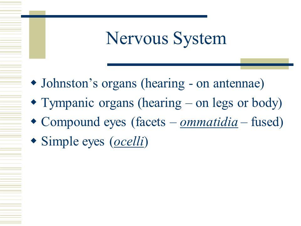 Nervous System Johnston's organs (hearing - on antennae)