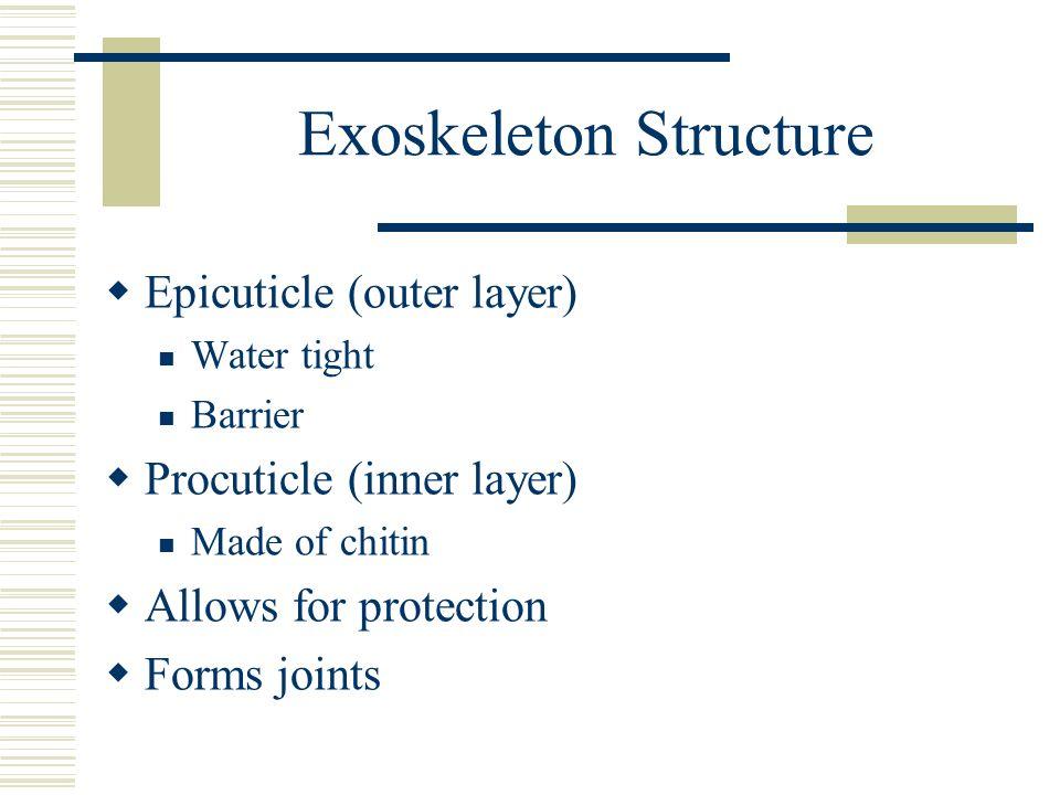 Exoskeleton Structure