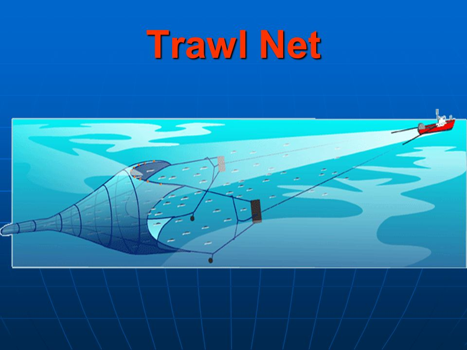 Trawl Net