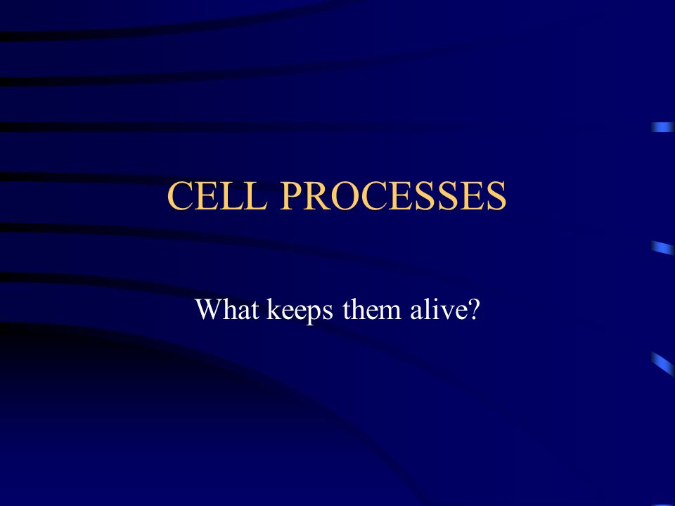 CELL PROCESSES What keeps them alive