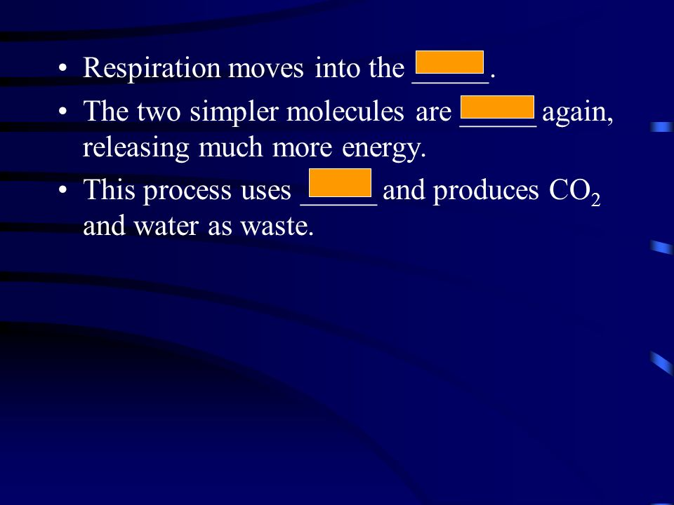 Respiration moves into the _____.