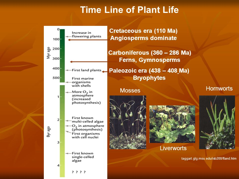 Cretaceous era (110 Ma) Angiosperms dominate