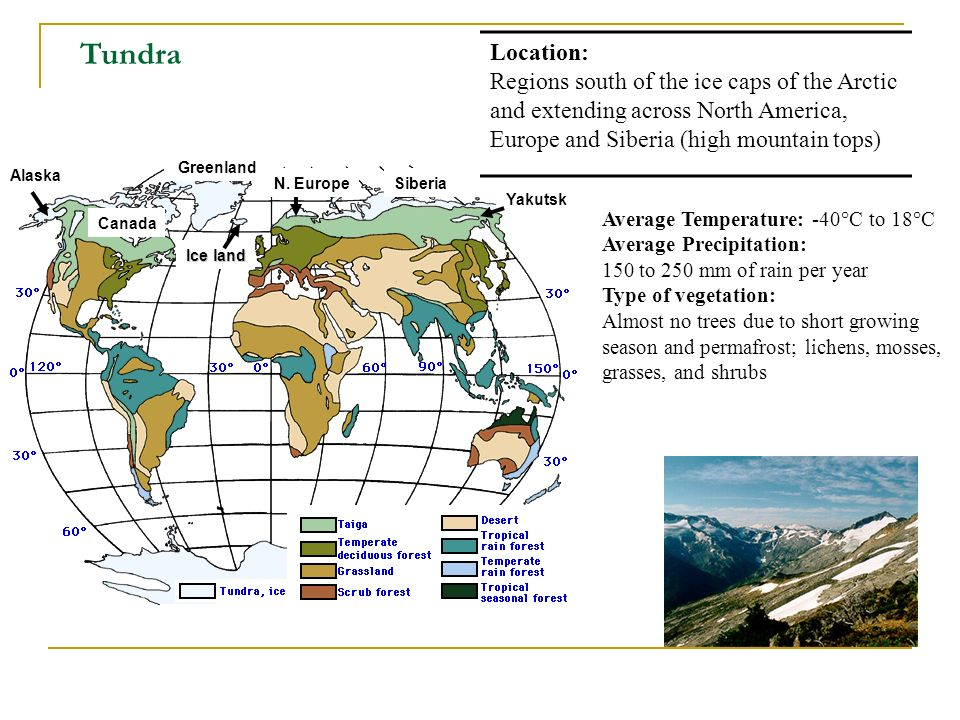 Tundra Location: Regions south of the ice caps of the Arctic and extending across North America, Europe and Siberia (high mountain tops)